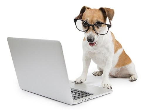 Desenvolvemos sistema para Pet Shop